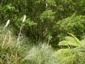 03012014_NZ_WhangareiToDargaville_07 (1024x768)