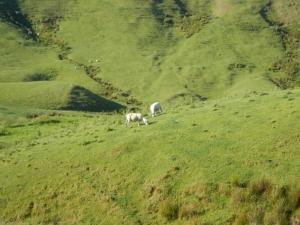 05012014_NZ_EnRoutePourTongariro_10 (1024x768)