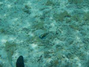 05102013_Aitutaki_Lagon_04 (1024x768)