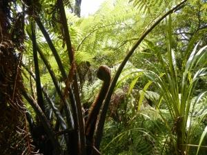 11122013_NZ_BoI_CapBrettPieds_02 (1024x768)
