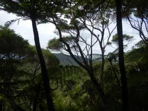 11122013_NZ_BoI_CapBrettPieds_04 (1024x768)