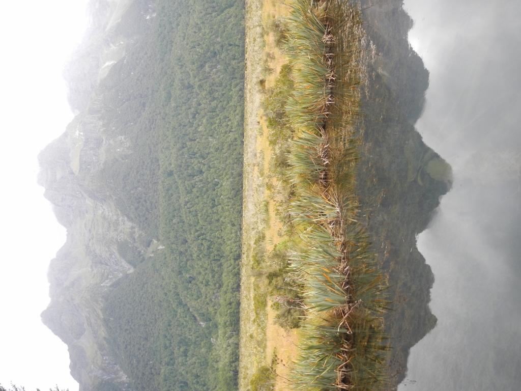 27022014_NZ_Fiordland_MirrorLake_02 (1024x768)